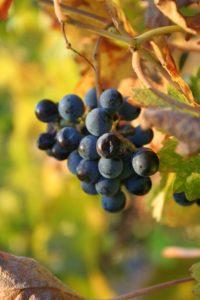 Fall wine tasting on Bainbridge Island