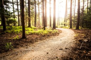 Hiking Trails on Bainbridge Island