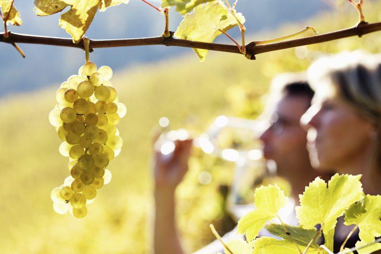 Visit the Wineries on Bainbridge Island